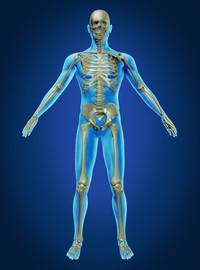 Area Osteoarticolare